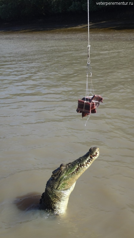 Прыгающий крокодил, Spectacular Jumping Crocodile Cruise, Личфилд, Австралия