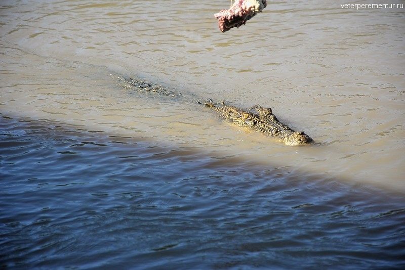 Крокодил, Spectacular Jumping Crocodile Cruise, Личфилд, Австралия