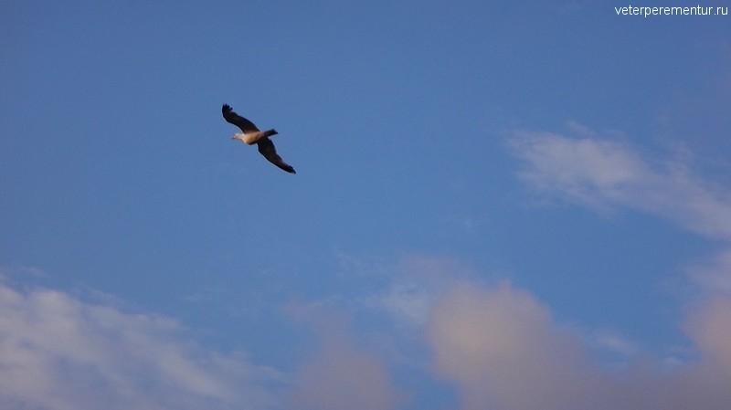 Птица над Босфором