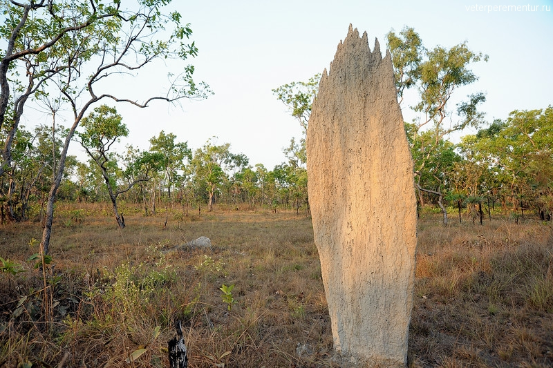 Magnetic Termite Mounds, Amitermes meridionalis. Litchfield National Park, NT, Australia