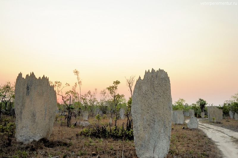 Magnetic Termite Mounds, Amitermes meridionalis. Litchfield National Park, NT, Australia.