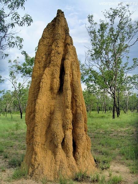 Cathedral Termite Mounds, Nasutitermes triodiae. Kakadu National Park, NT, Australia.