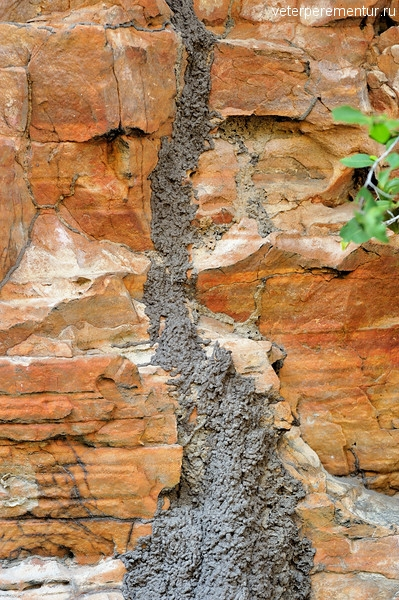 Rock Termites, Marribanggag. Bardedjilidji Sandstone, Kakadu National Park, NT, Australia