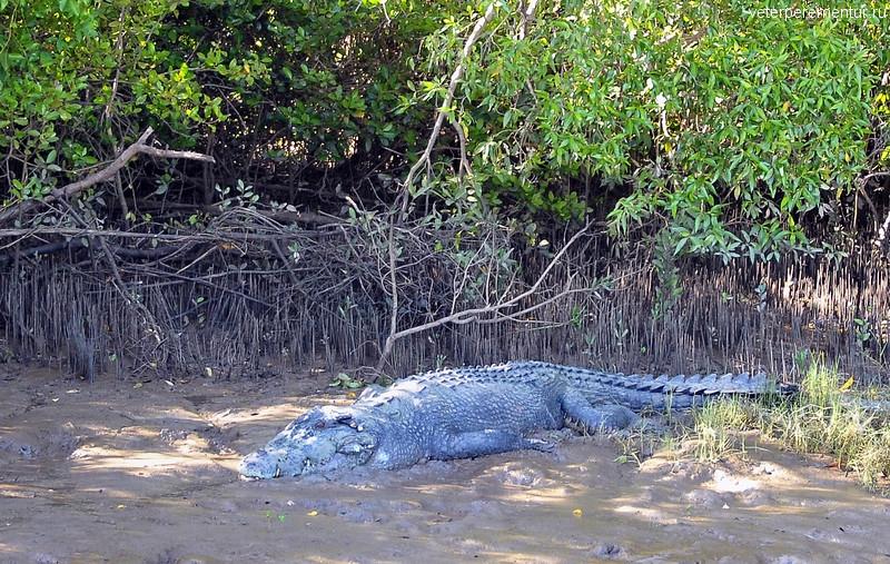 Крокодил Брутус, Личфилд, Австралия
