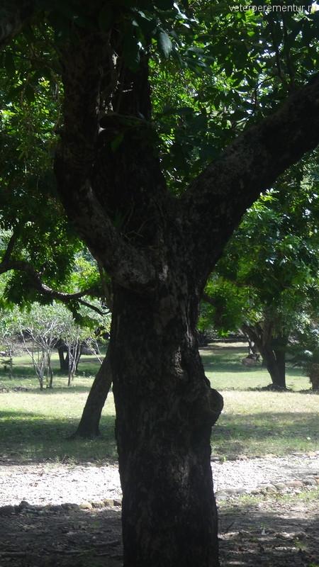 Растительность острова Комодо