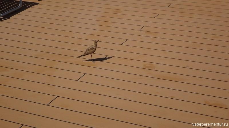 Птица на борту Rhapsody of the Seas