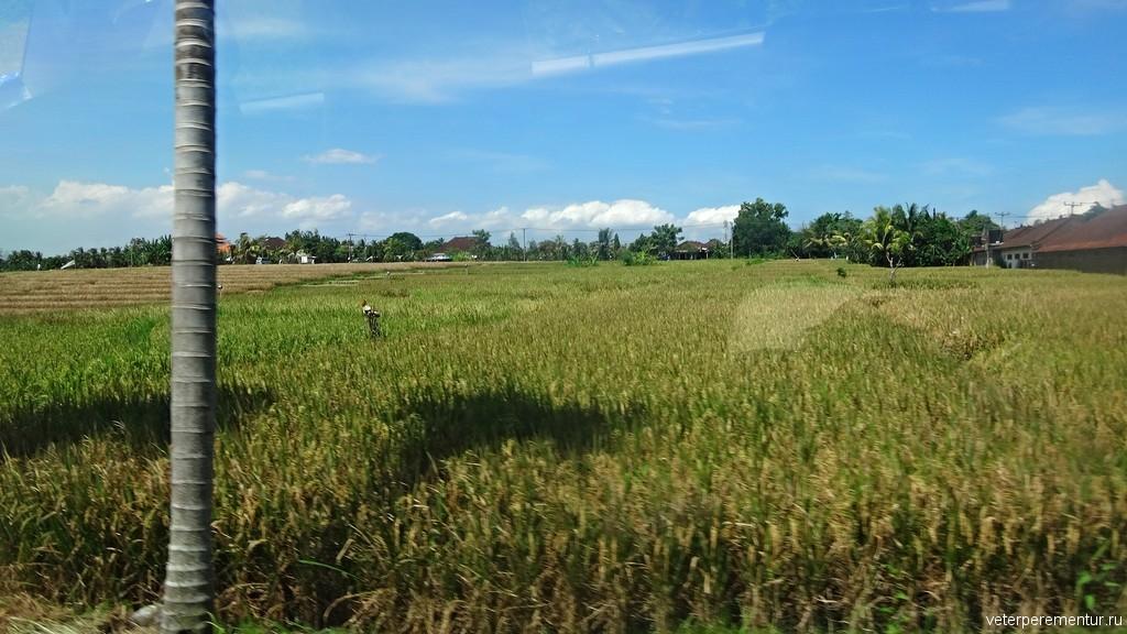 поля, Бали