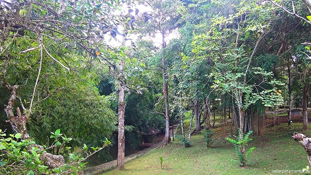 растительность на территории храма Таман Аюн (Pura Taman Ayun), Бали
