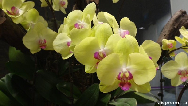 Орхидеи в сингапурском аэропорту