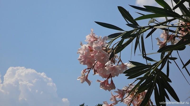 Цветы в Салерно