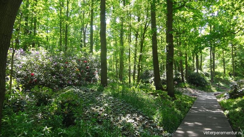 парк Кейкенхоф (Keukenhof)