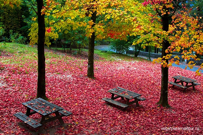 680-fall-leaves-trees-geres-portugal