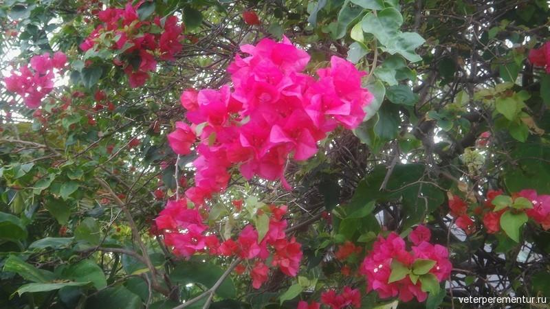 Форт Лодердейл, цветы на улице