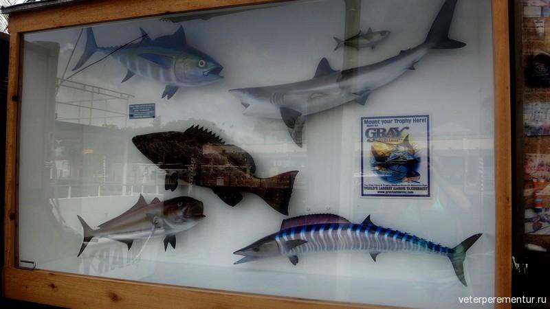 Форт Лодердейл, макеты рыб