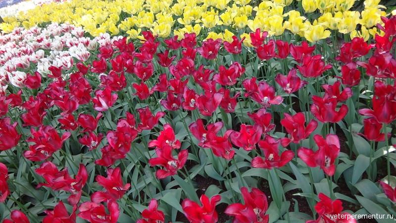 Парк цветов Keukenhof