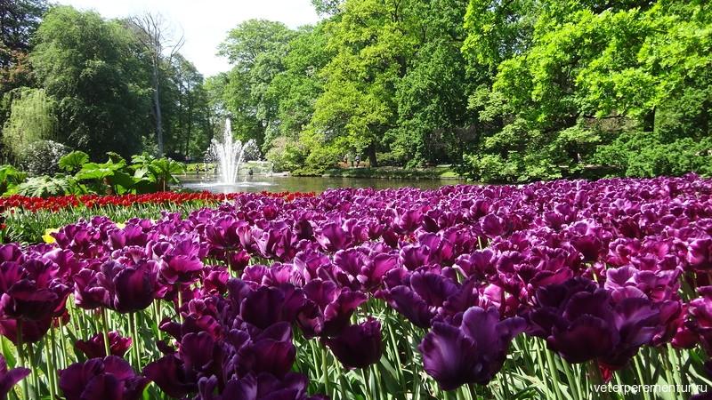 Парк цветов Keukenhof, фонтан