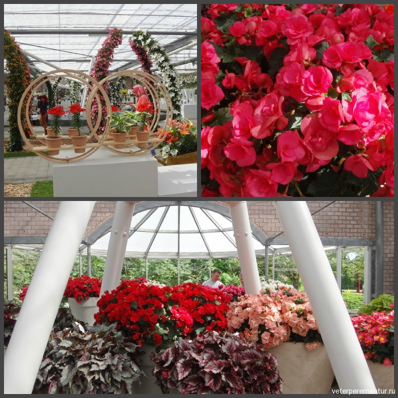 павильон Willem-Alexander, парк тюльпанов в Голландии