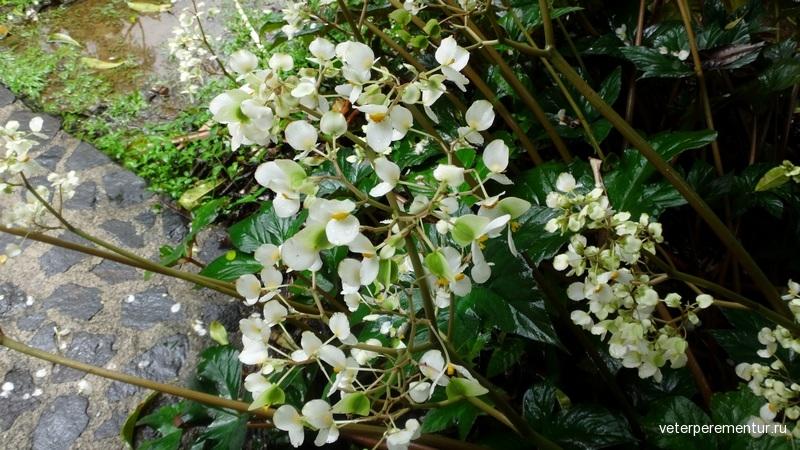 Papillote Tropical Garden