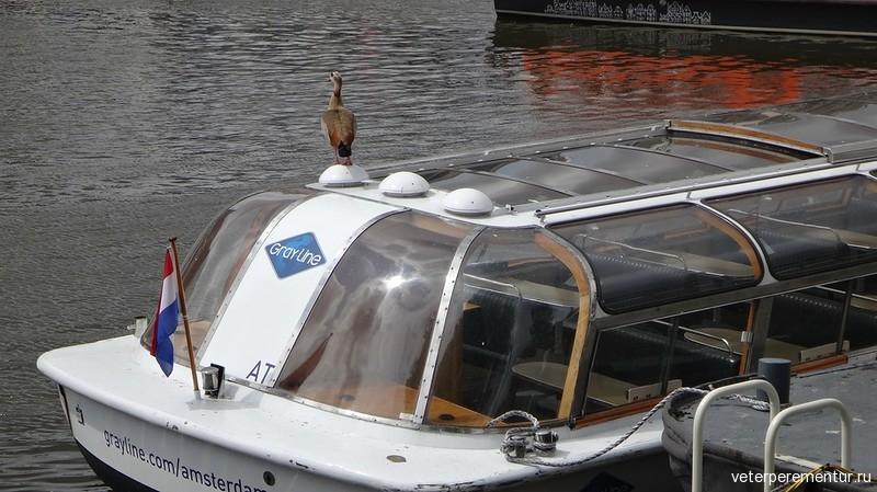 Амстердам, прогулочный кораблик