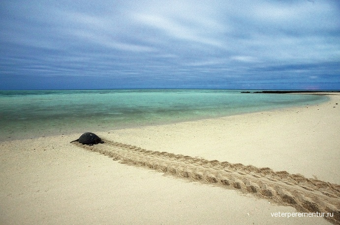 heron-island-how-to-meet-the-turtles-of-the-southern-great-barrier-reef