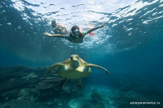 lady-elliot-island-how-to-meet-the-turtles-of-the-southern-great-barrier-reef