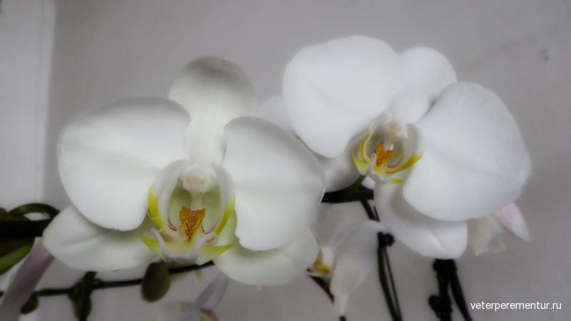 Дом Мандарина, Макао, орхидеи