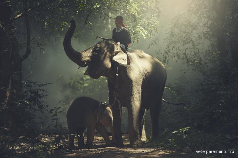 asia-elephant-family-and-son-with-mahout-in-wild