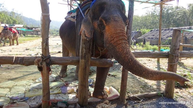 Краби, Таиланд, слоны