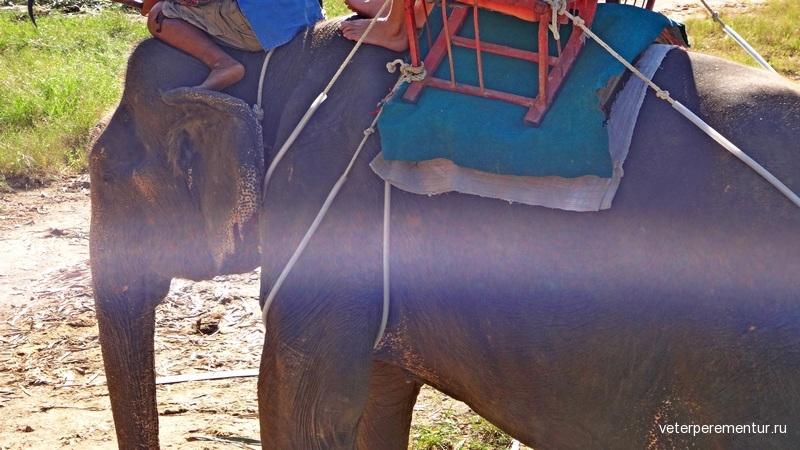 Краби, Таиланд, катание на слонах