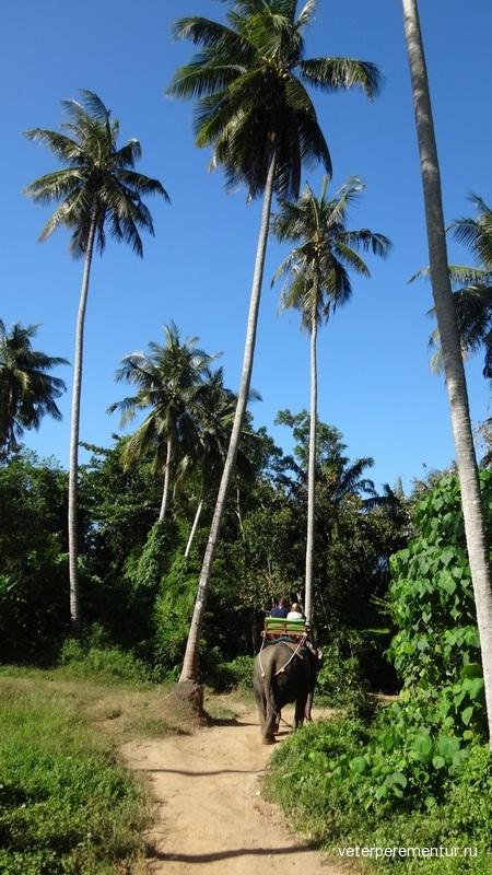 раби, Таиланд, катание на слонах