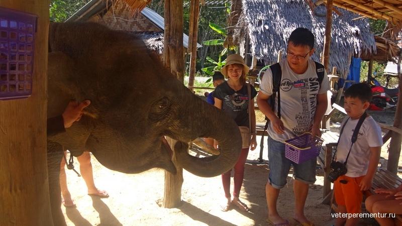Краби, слоны