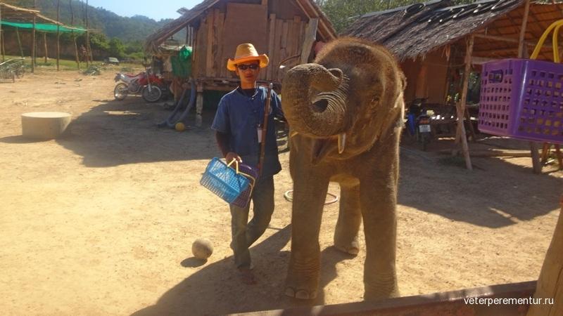 Краби, слон