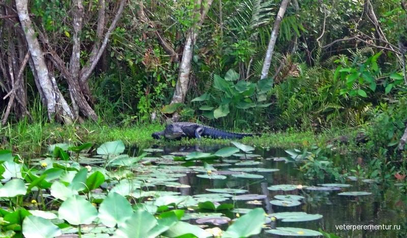 Заповедник Эверглейдс, крокодил