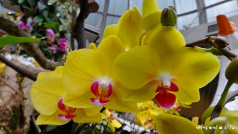 Орхидеи в ботаническом саду Гонконга