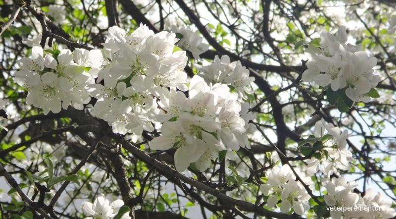 Цветущие деревья
