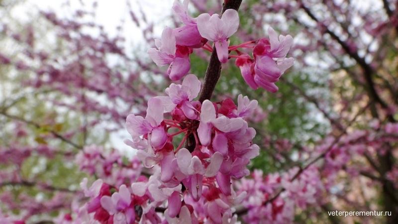 Деревья и цветы после дождя