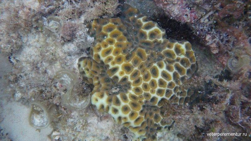 Кораллы, Филиппины