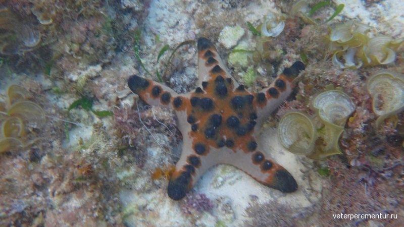 морская звезда, Филиппины