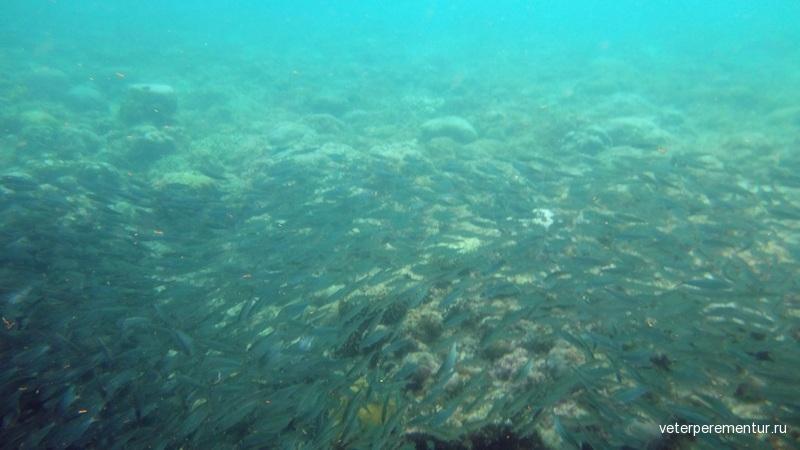 Сардины рядом с Panagsama Beach, Филиппины