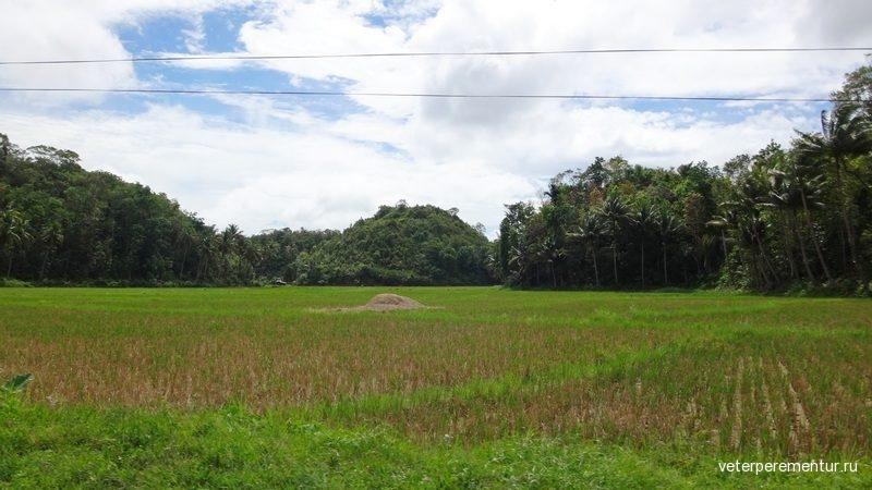 рисовые поля, Филиппины