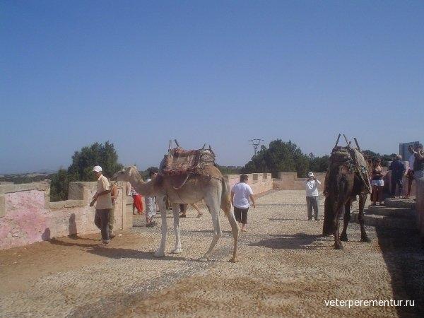 Марокко, верблюды