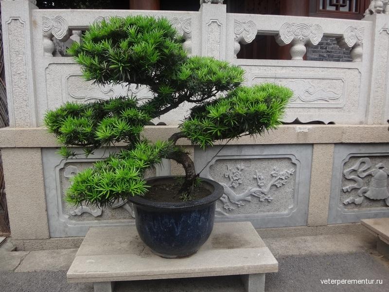комплекс храмов Longhua