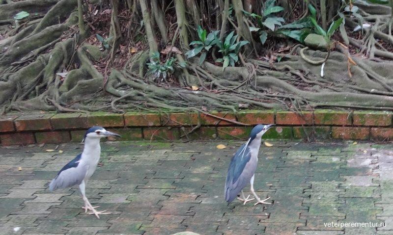 Куала-Лумпур, Парк птиц