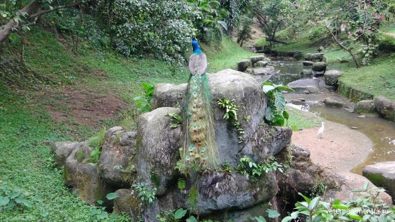 Парк птиц, Куала-Лумпур