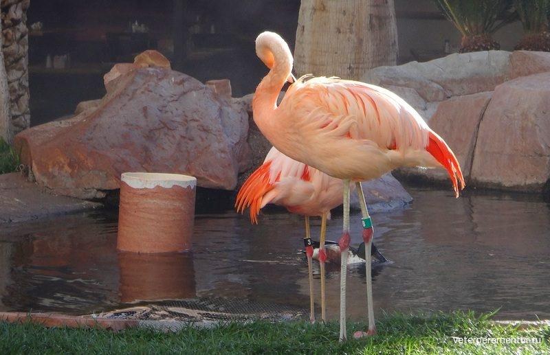 Лас Вегас, отель Фламинго