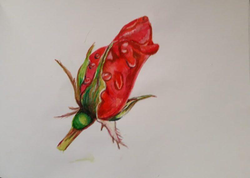 Рисунок роза