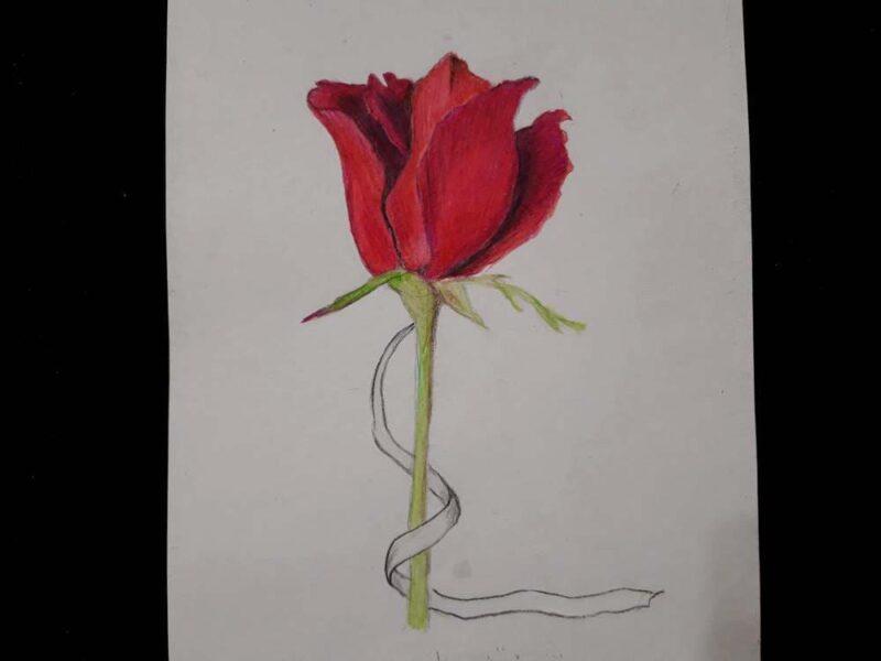 роза с белой лентой